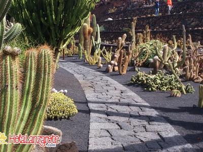jardn de cactus print